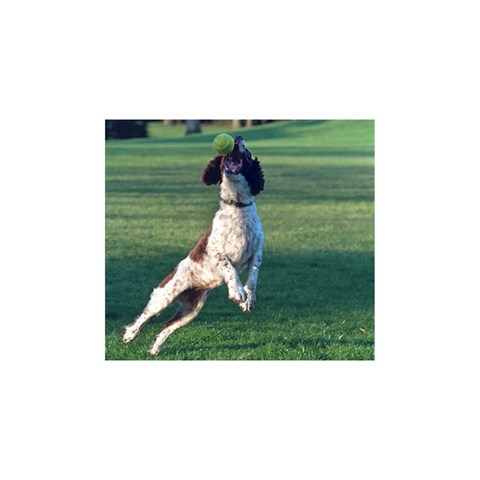English Springer Catching Ball YOU ARE INVITED 3D Greeting Card (8x4)