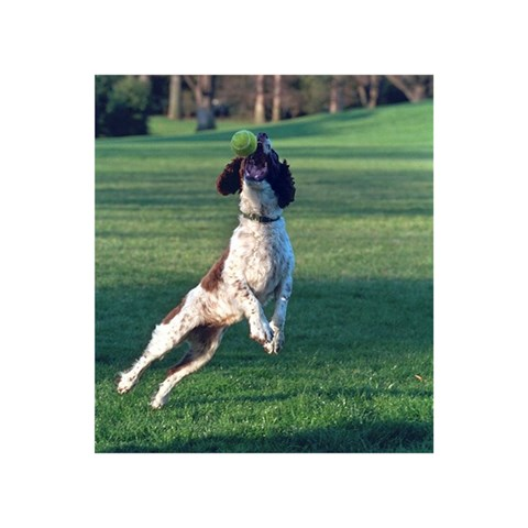 English Springer Catching Ball Birthday Cake 3D Greeting Card (7x5)