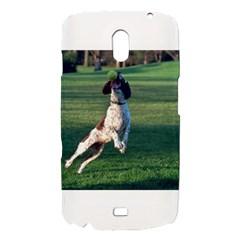 English Springer Catching Ball Samsung Galaxy Nexus i9250 Hardshell Case