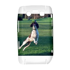 English Springer Catching Ball Bold 9700