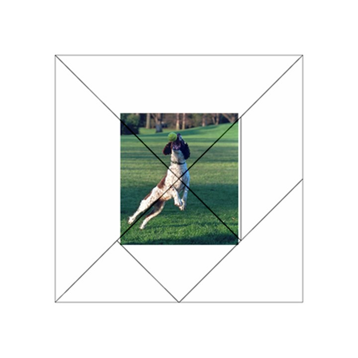 English Springer Catching Ball Acrylic Tangram Puzzle (4  x 4 )