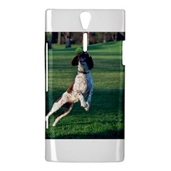 English Springer Catching Ball Sony Xperia S