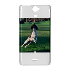 English Springer Catching Ball Sony Xperia V