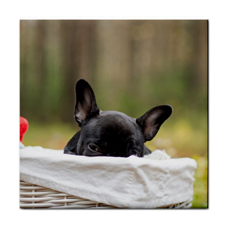 French Bulldog Peeking Puppy Tile Coasters