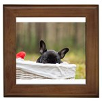 French Bulldog Peeking Puppy Framed Tiles Front