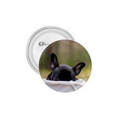 French Bulldog Peeking Puppy 1.75  Buttons