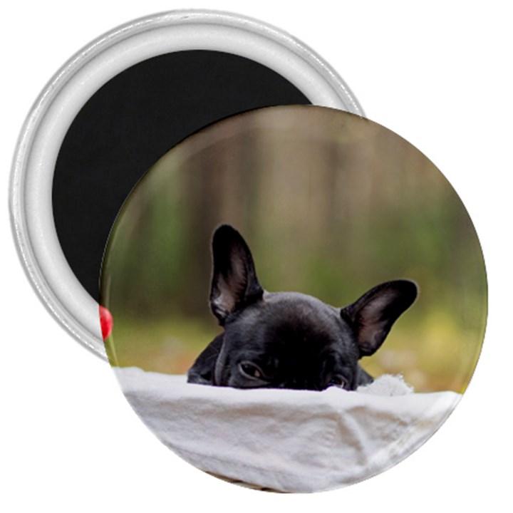 French Bulldog Peeking Puppy 3  Magnets