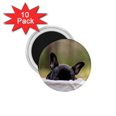 French Bulldog Peeking Puppy 1.75  Magnets (10 pack)