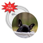 French Bulldog Peeking Puppy 2.25  Buttons (10 pack)  Front