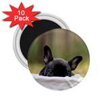 French Bulldog Peeking Puppy 2.25  Magnets (10 pack)  Front