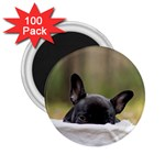 French Bulldog Peeking Puppy 2.25  Magnets (100 pack)  Front