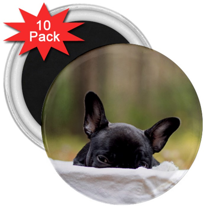 French Bulldog Peeking Puppy 3  Magnets (10 pack)