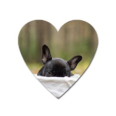 French Bulldog Peeking Puppy Heart Magnet