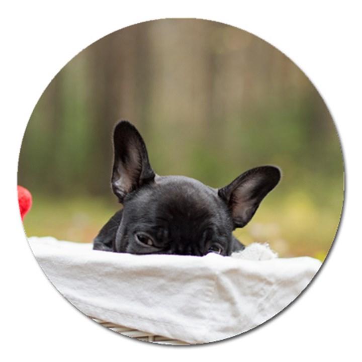 French Bulldog Peeking Puppy Magnet 5  (Round)
