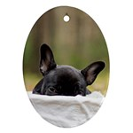French Bulldog Peeking Puppy Oval Ornament (Two Sides) Front