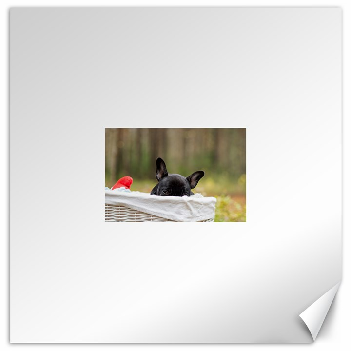 French Bulldog Peeking Puppy Canvas 16  x 16