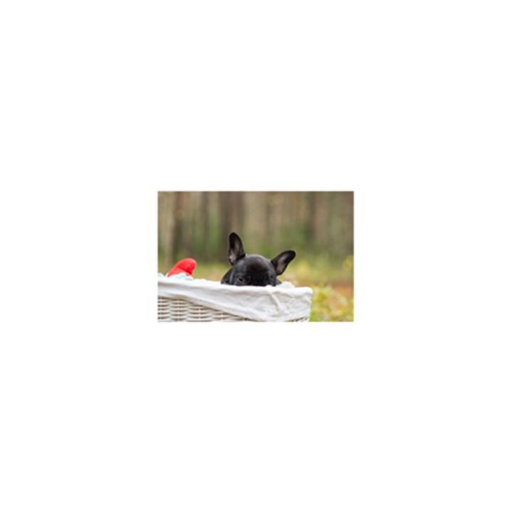 French Bulldog Peeking Puppy 5.5  x 8.5  Notebooks