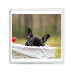 French Bulldog Peeking Puppy Memory Card Reader (Square)  Front