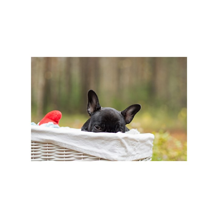 French Bulldog Peeking Puppy Birthday Cake 3D Greeting Card (7x5)