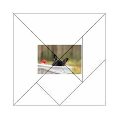 French Bulldog Peeking Puppy Acrylic Tangram Puzzle (6  x 6 )
