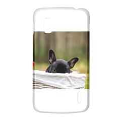 French Bulldog Peeking Puppy LG Nexus 4