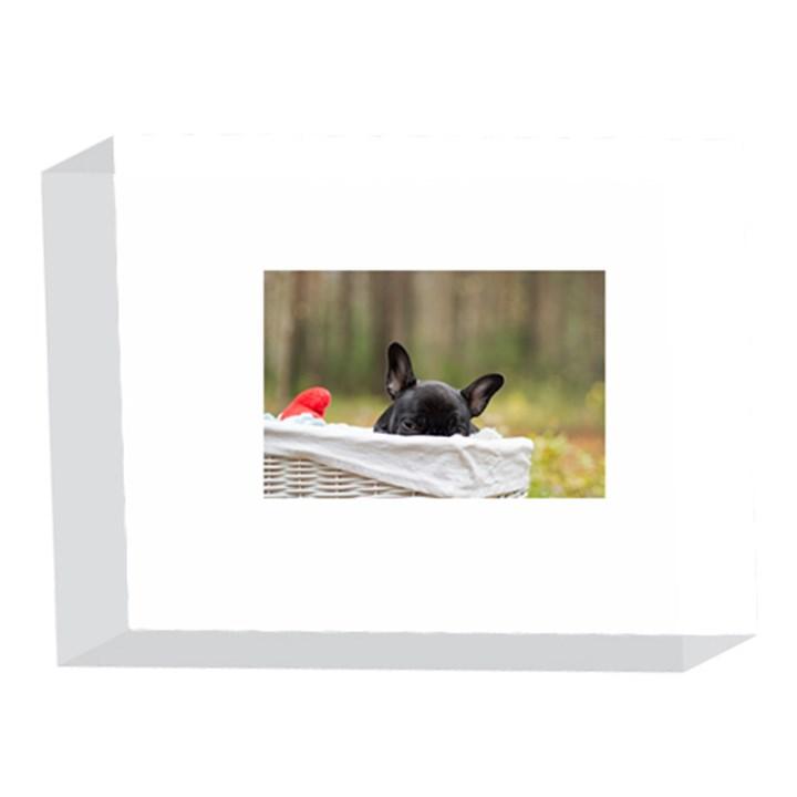 French Bulldog Peeking Puppy 5 x 7  Acrylic Photo Blocks