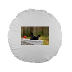 French Bulldog Peeking Puppy Standard 15  Premium Flano Round Cushions