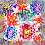 Colorful Succulents Mini Canvas 8  x 8  8  x 8  x 0.875  Stretched Canvas