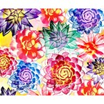 Colorful Succulents Deluxe Canvas 14  x 11  14  x 11  x 1.5  Stretched Canvas