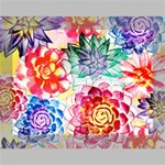 Colorful Succulents Deluxe Canvas 16  x 12   16  x 12  x 1.5  Stretched Canvas