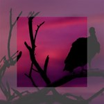 Vultures At Top Of Tree Silhouette Illustration Mini Canvas 4  x 4  4  x 4  x 0.875  Stretched Canvas