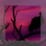 Vultures At Top Of Tree Silhouette Illustration Mini Canvas 6  x 6  6  x 6  x 0.875  Stretched Canvas