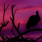 Vultures At Top Of Tree Silhouette Illustration Happy Birthday 3D Greeting Card (8x4) Inside