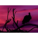 Vultures At Top Of Tree Silhouette Illustration Ribbon 3D Greeting Card (7x5) Back
