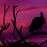 Vultures At Top Of Tree Silhouette Illustration Happy New Year 3D Greeting Card (8x4) Inside