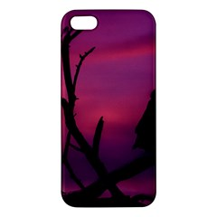 Vultures At Top Of Tree Silhouette Illustration Apple iPhone 5 Premium Hardshell Case