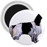 English Setter Full 3  Magnets Front