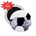 English Setter Full 2.25  Magnets (10 pack)  Front