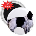 English Setter Full 3  Magnets (100 pack) Front