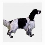 English Setter Full Medium Glasses Cloth Front