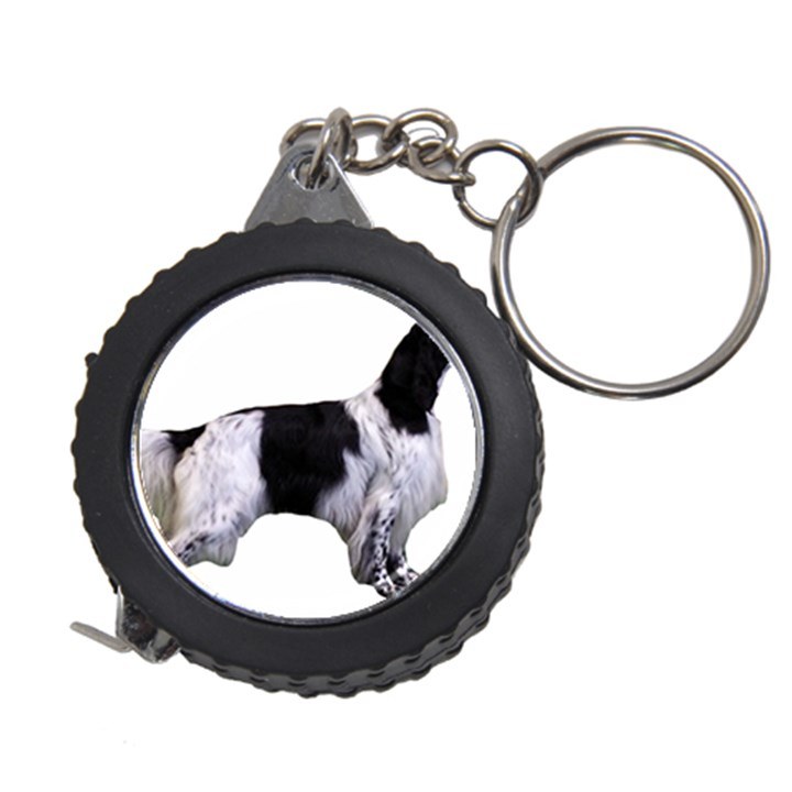 English Setter Full Measuring Tapes