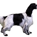 English Setter Full Magic Photo Cubes Side 1