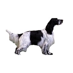 English Setter Full YOU ARE INVITED 3D Greeting Card (8x4)