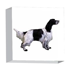 English Setter Full 5  x 5  Acrylic Photo Blocks