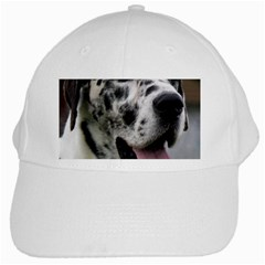 Great Dane harlequin  White Cap