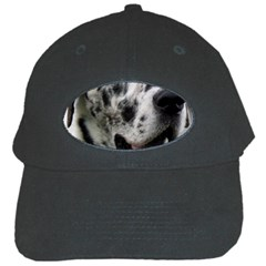 Great Dane harlequin  Black Cap