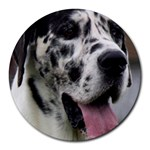Great Dane harlequin  Round Mousepads Front