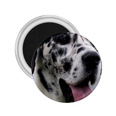 Great Dane harlequin  2.25  Magnets
