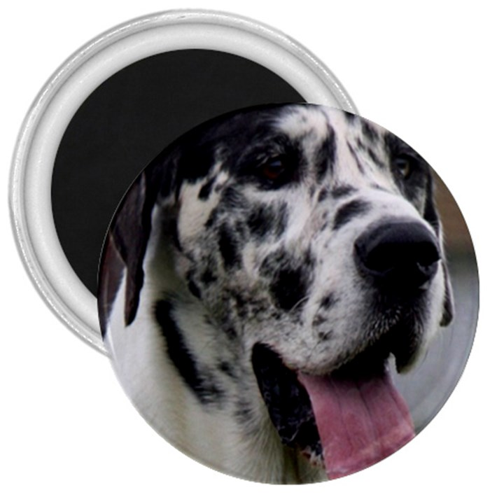 Great Dane harlequin  3  Magnets