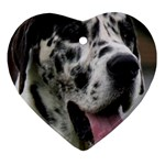 Great Dane harlequin  Ornament (Heart)  Front